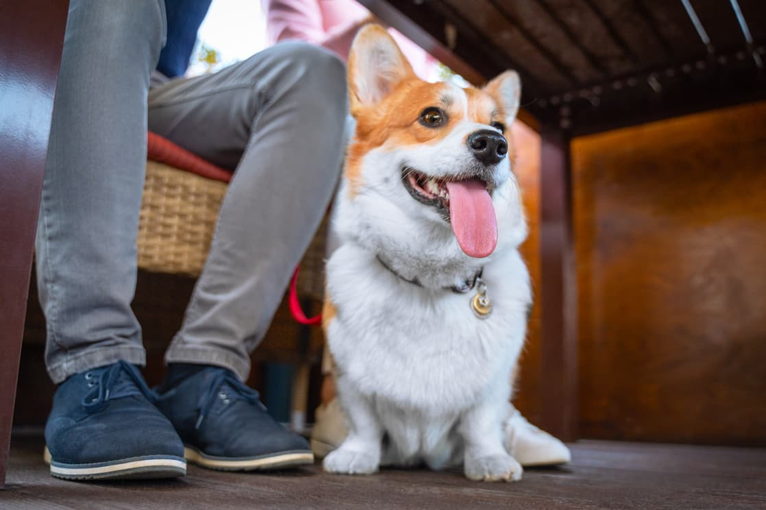 pet friendly dining in Chestertown