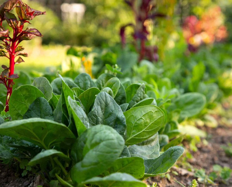 garden fresh vegetables at our Maryland B&B