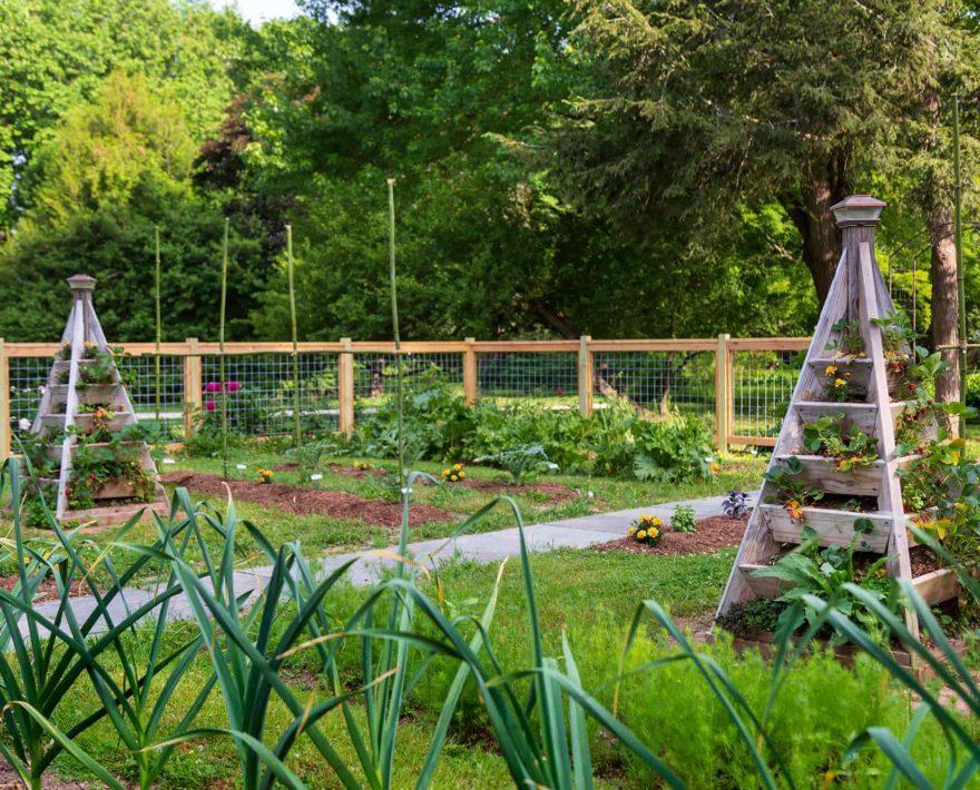 vegetable garden at our Eastern Shore Inn